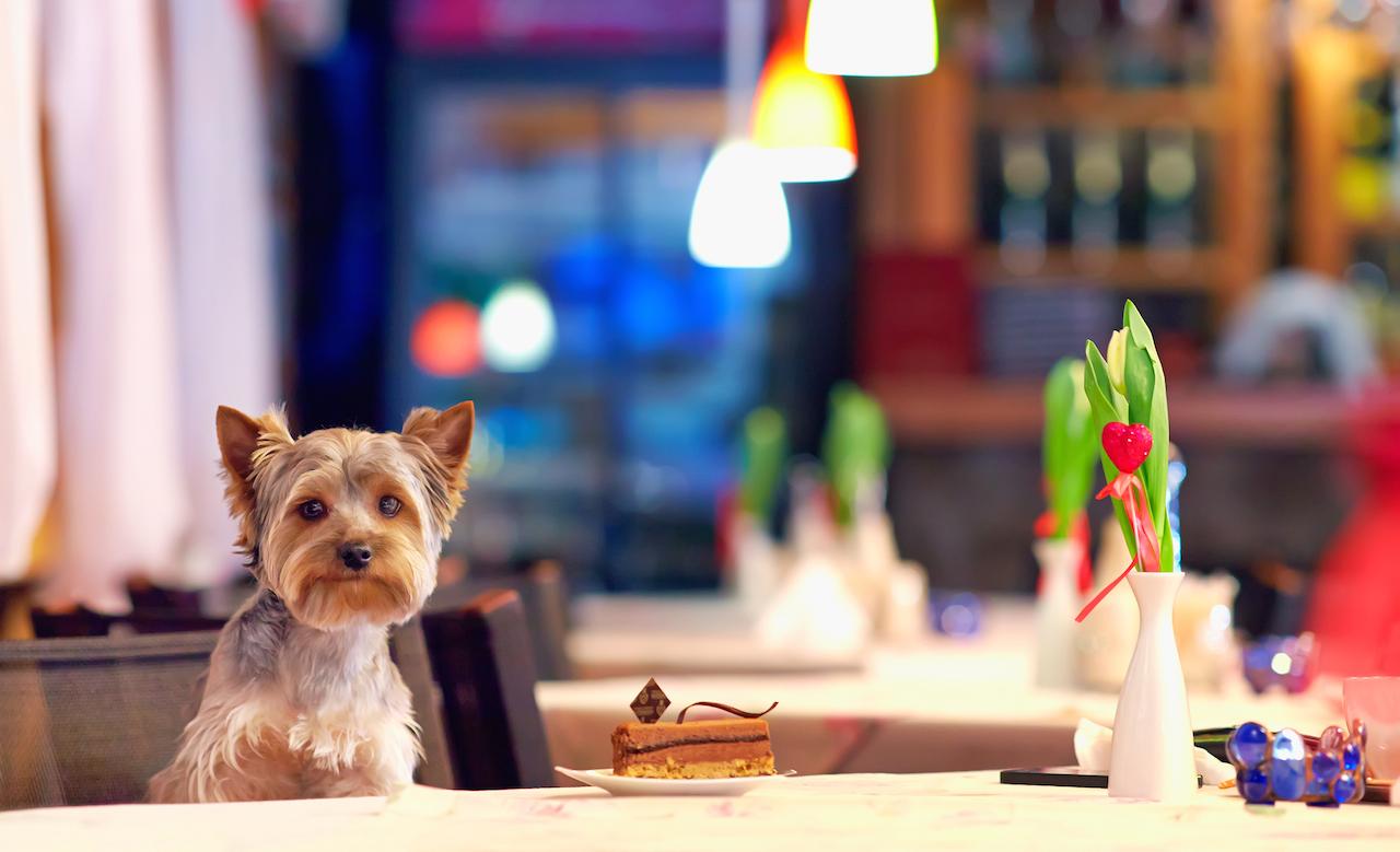 Cafes Dog Friendly Sydney